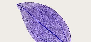 Frunze Unghii